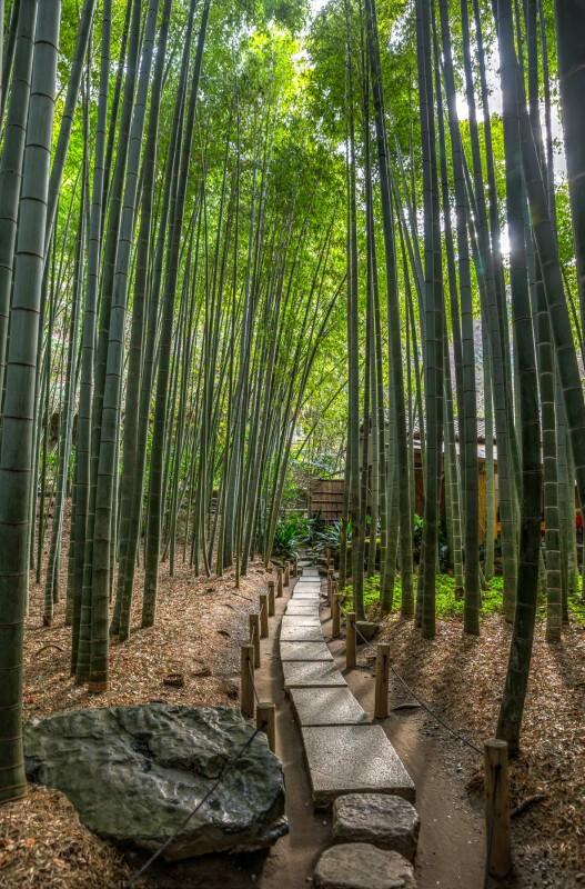 Kokoku-ji Bamboo Forest - Kamakura, Japan