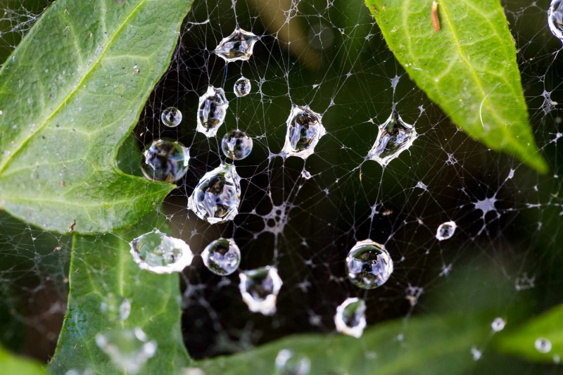 Spider Web Macro Shot After Rain